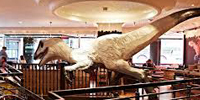 Jay Jay Burridge Dinosaur